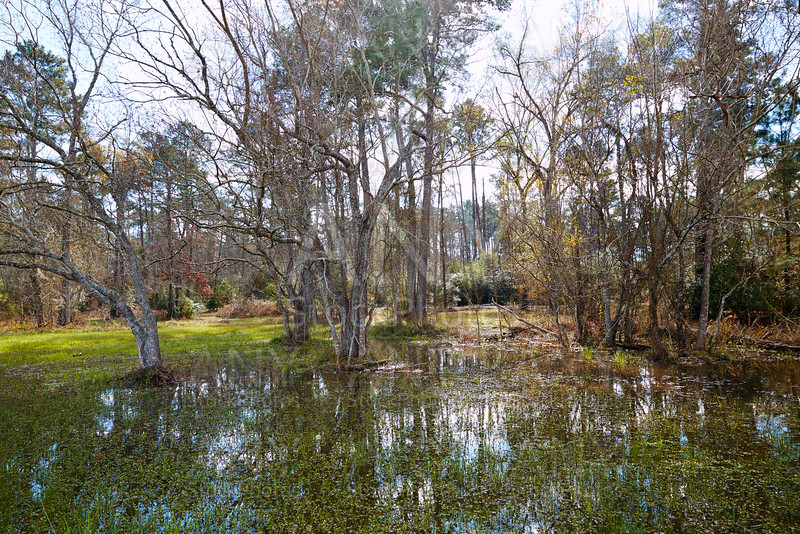 Tomball Burroughs park in Houston Texas