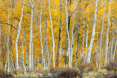 Colorado (4 Seasons)