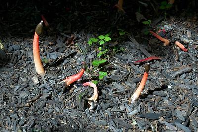 Garden Oddities