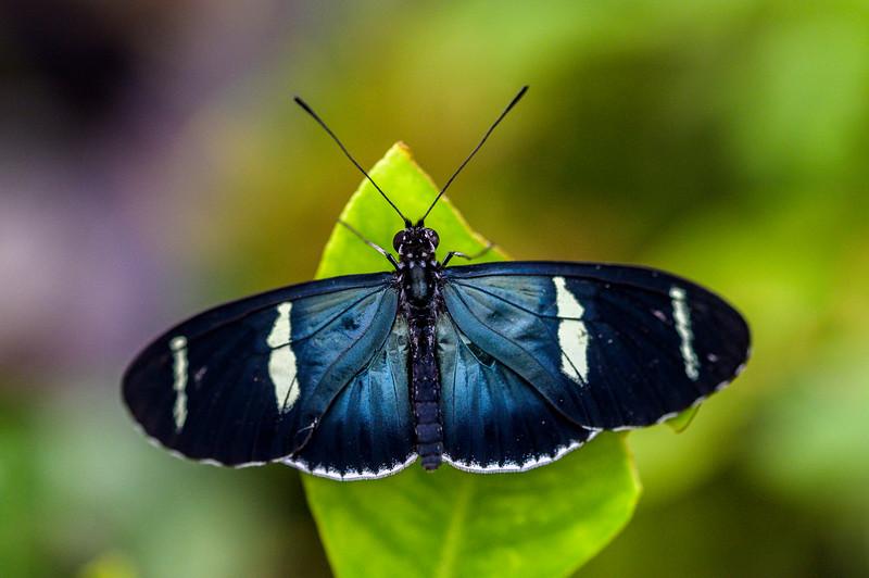 Middleton Butterflies-3233.jpg