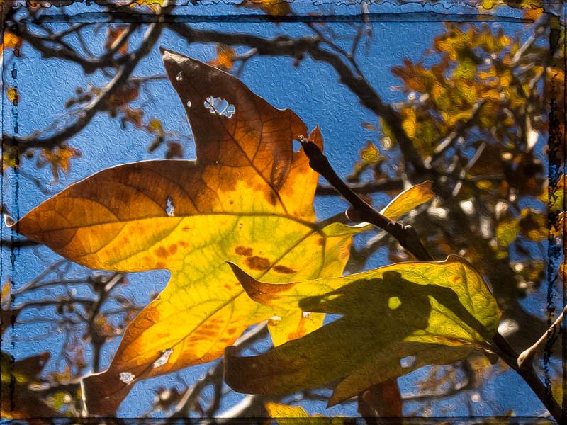December 31 - Winter leaves in Los Angeles.jpg