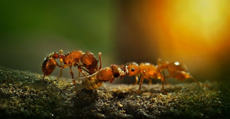 Bugs and Beetles - 175.jpg