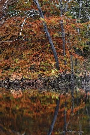 November 2020 - Tulip Creek - Ouachita County