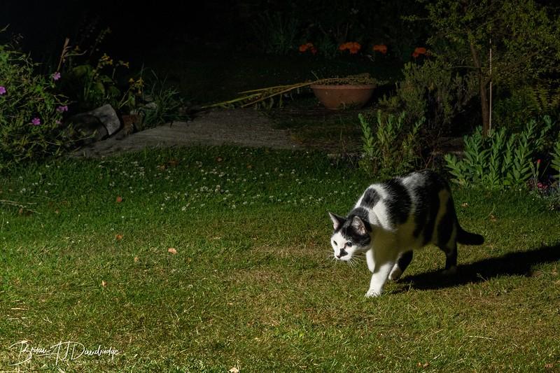 Garden Night Shoot-7290.jpg