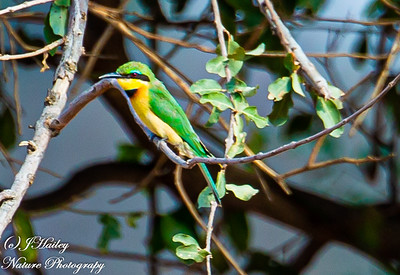 Best of Kruger NP (Birds)