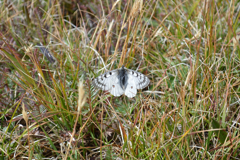 Beautiful nature – butterfly on our way back.