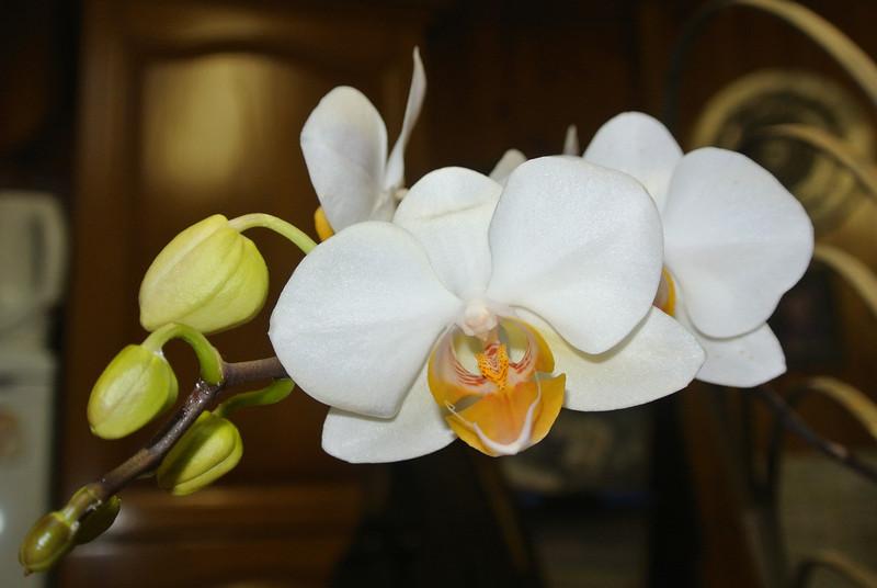 2013-05-05 Orchid 'Remi' 05.JPG