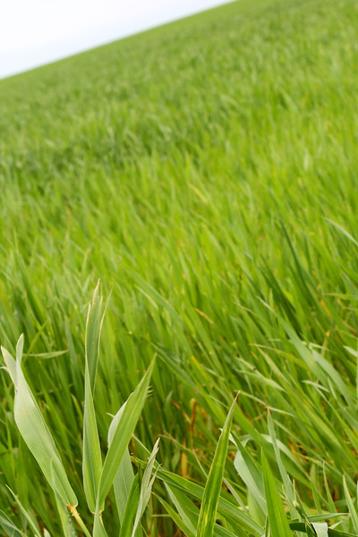 Grass7433.jpg