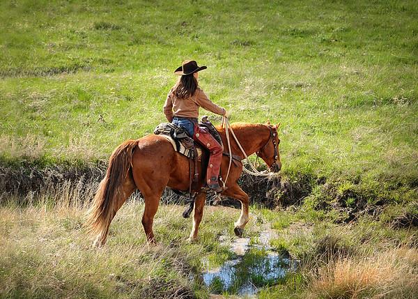 horse homepage