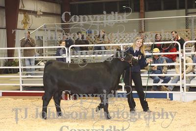 2010Spring Branch FFA Livestock Show