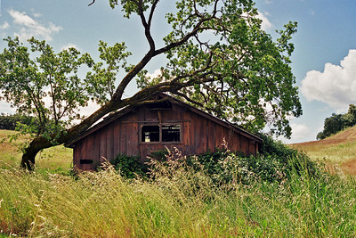 Meadows, Forests, Barns, Animals