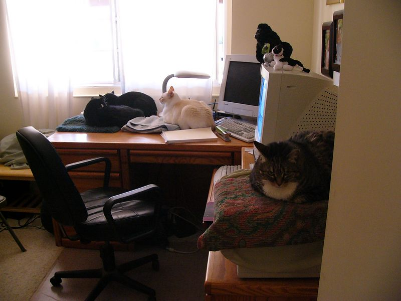 my crowded office