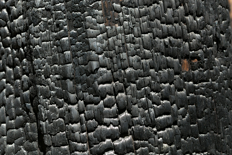 Sequoia_0337.jpg