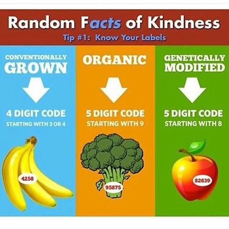 FreshGreenSmoothies_com-Vegans-Intelligent-Compassionate-raworganicvegan-4259.jpg