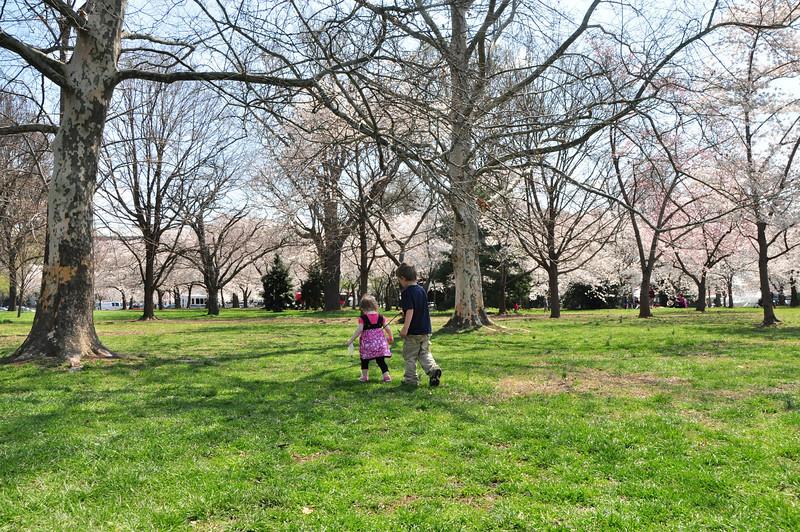Cherry Blossoms 2014 043.jpg