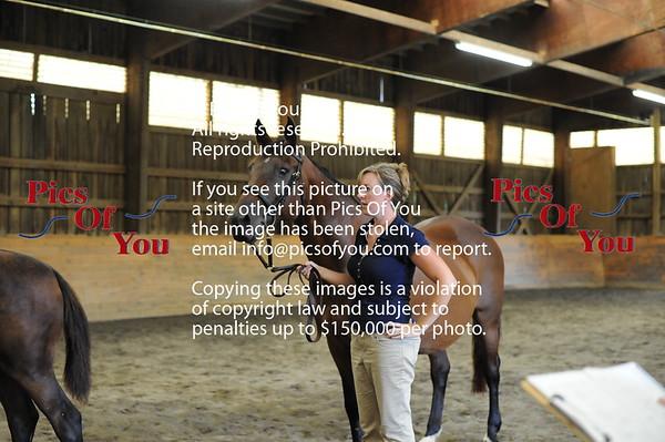 Foal entry 7