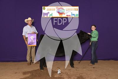 Jr. Commercial Heifer