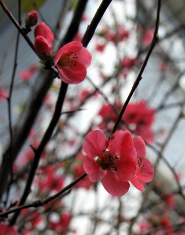 sunday florafeb26b.jpg