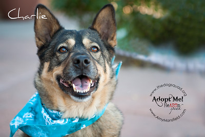 2013 Dog Squad Adoption Event at Bressi Ranch