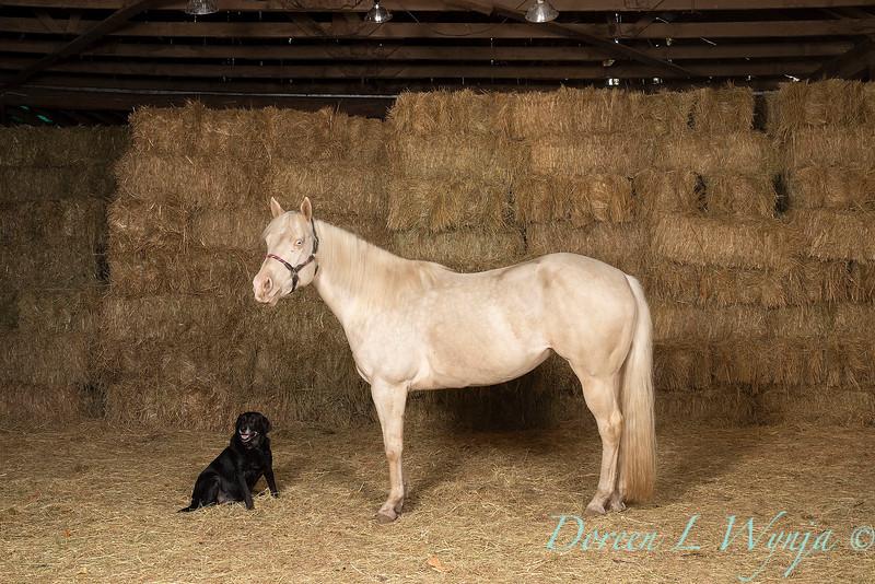 Horse family portrait_135.jpg