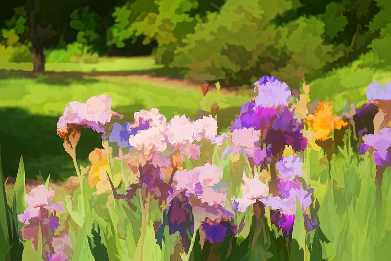 Garden Iris 02