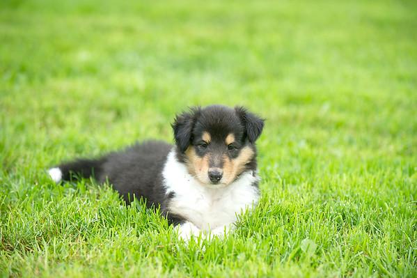 Puppies 6-4-16