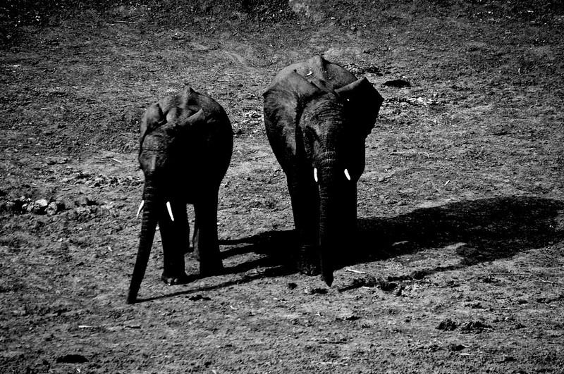 Kenya.Card3.02.2014 508