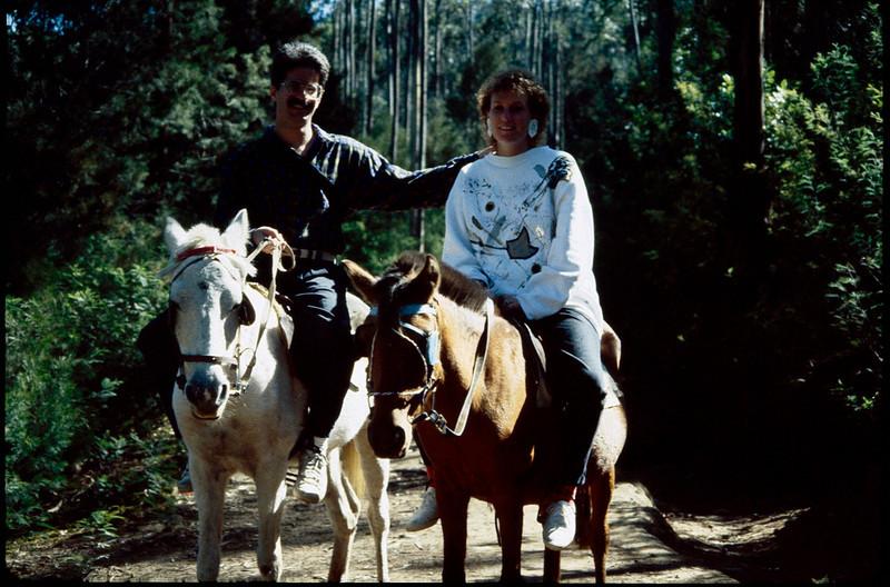all day pony trek through Eucalyptus forest
