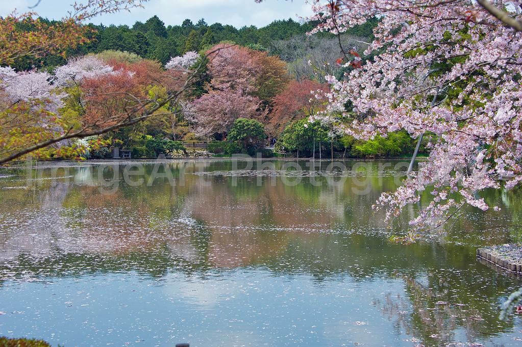 Ryoanji, Garden