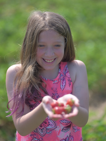 June 17, 2018 - Strawberry Picking for Fathers Day-216.jpg