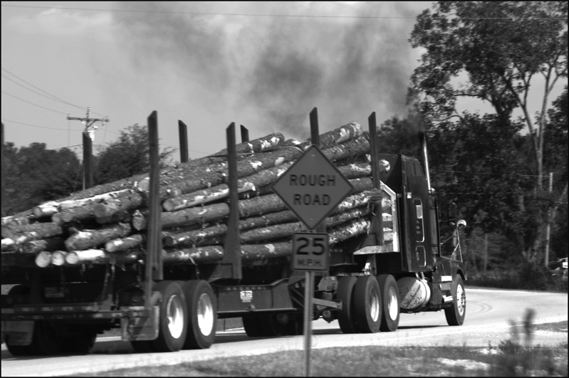 A truck hauling trees to the lumber yard