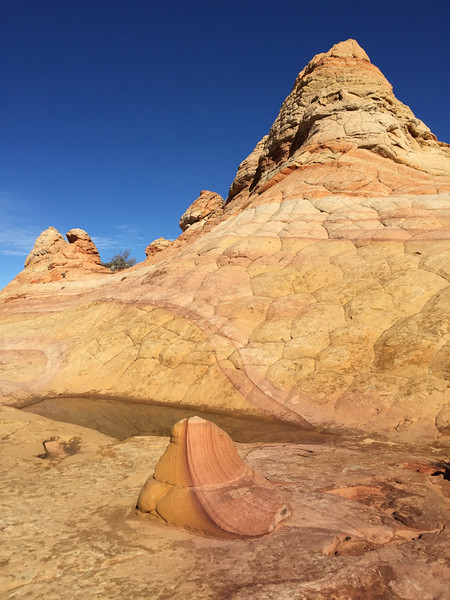 Coyote Buttes Cottonwood - half and half at south buttes - KW - KCOT.jpg
