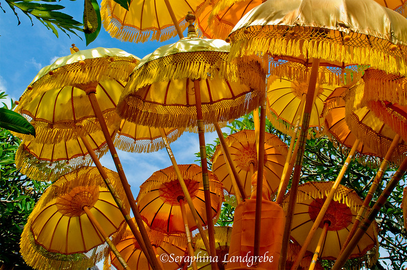 _DSC2847Sprouting Umbrellas.jpg