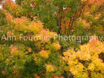 Autumn Landscapes & Pumpkins
