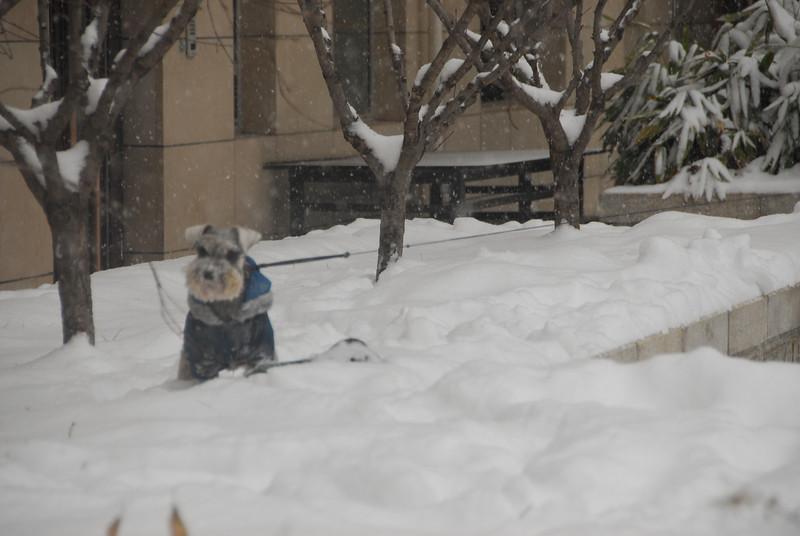 [20100103] 1st 2010 Snow in Beijing (95).JPG