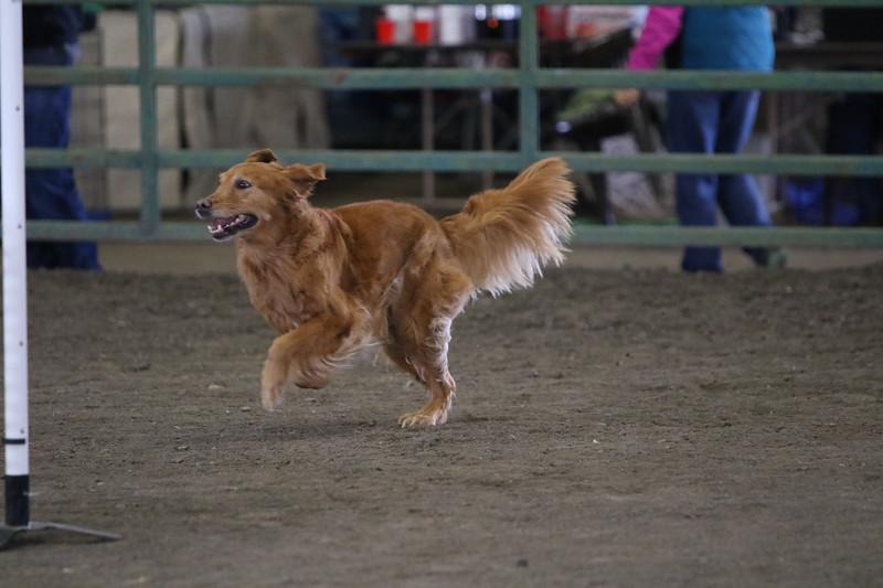 3-10-2019 Bloodhound-0624.jpg