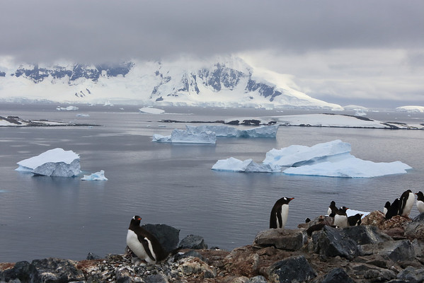 Antarctica: South of the Circle