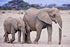 Photograph of two elephants walking through the plains of Africa. Photography fine art photo prints print photos photograph photographs image images artwork.