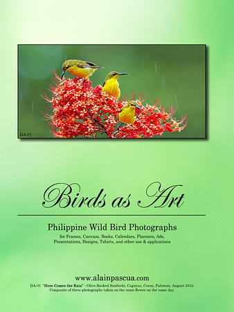 Birds as Art 2013-2014