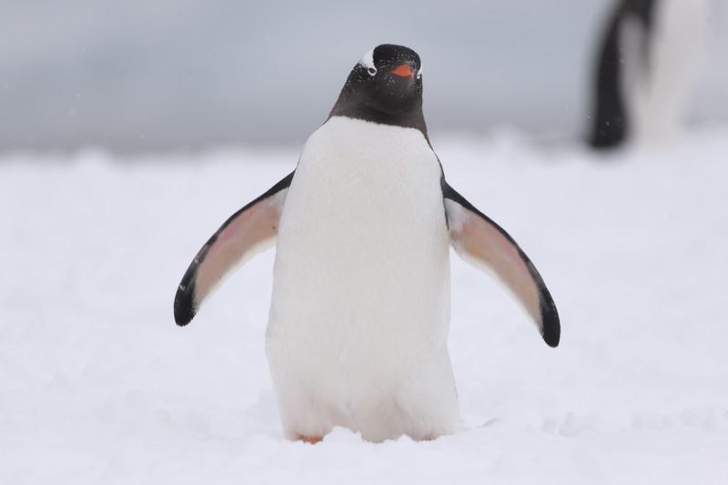 Antarctica-21010.jpg