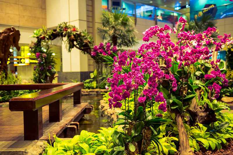 In every terminal sections, they have this oasis, filled with orchids flowers and a pond. Yes, those are real flowers.