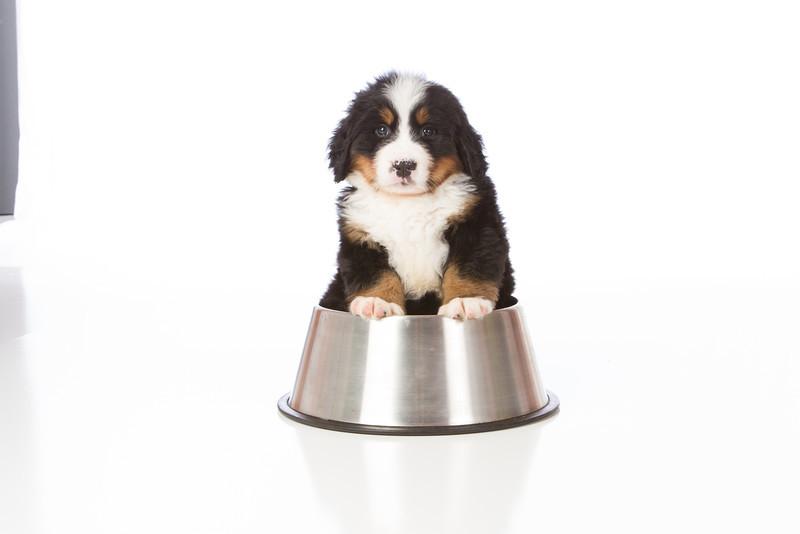 2013-Pearson Pups-Jun02-0346.jpg