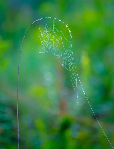 AM Dew Grass 18