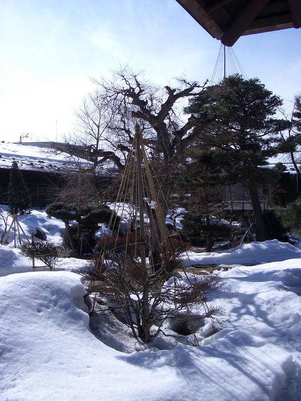In Takayama.  They tie up the trees like this so that the snow will not break off the branches.  Looks like a lot of work.