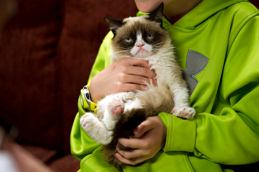 """. The cat \""""Tardar Sauce,\"""" better known by its viral Internet meme name \""""Grumpy Cat,\"""" appears during a press event during the 2013 SXSW Music, Film + Interactive Festival on March 7, 2013, in Austin, Texas. She had earlier been taped for a webisode as part of Friskies\' \""""Will Kitty Play With It?\"""" series. (Photo by Daniel Petty/The Denver Post)"""