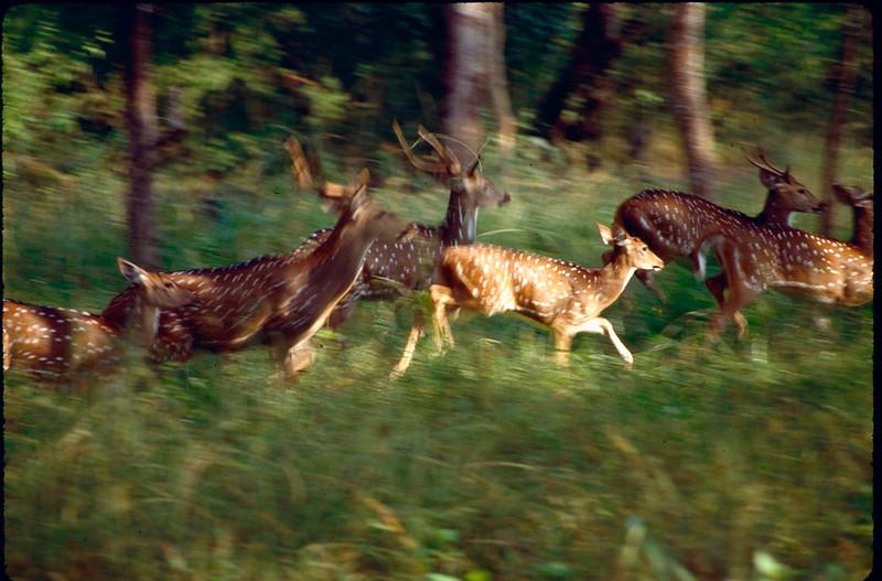 India1_088.jpg