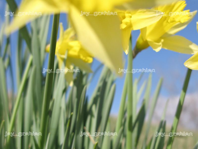 20100329_Flowers05.jpg