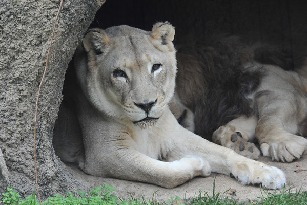 Philadelphia Zoo 11/15/2011