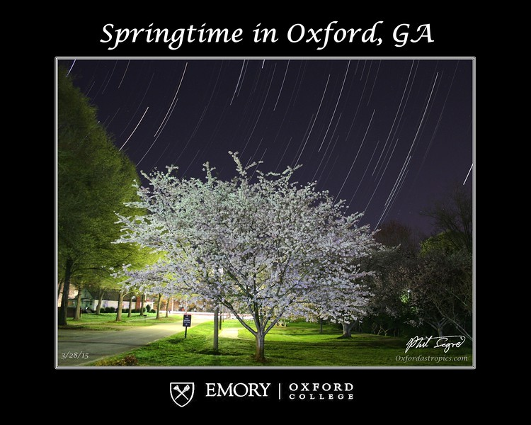 2015-3-28-Oxford-Cherry-Tree-zoom.jpg