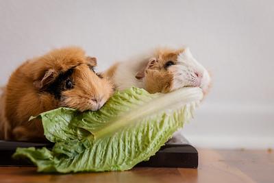 Murph & Chewy